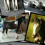 Aureas-Nobilis-Schmuck-mit-Pferdehaar-Schweifhaar-Kundenreferenz-023